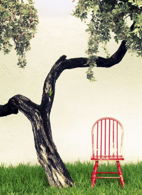 Picture of a tree and a chair