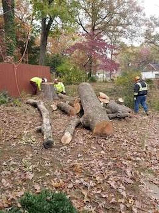Picture of Stump Grinding